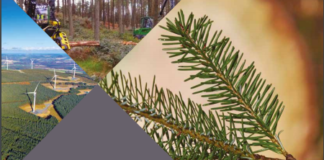Coillte annual report front page