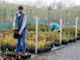ITB student working with plants