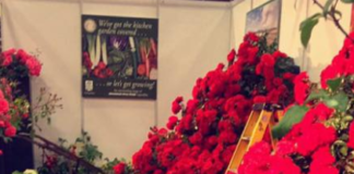 O'Dowd Roses & Nurseries roses image
