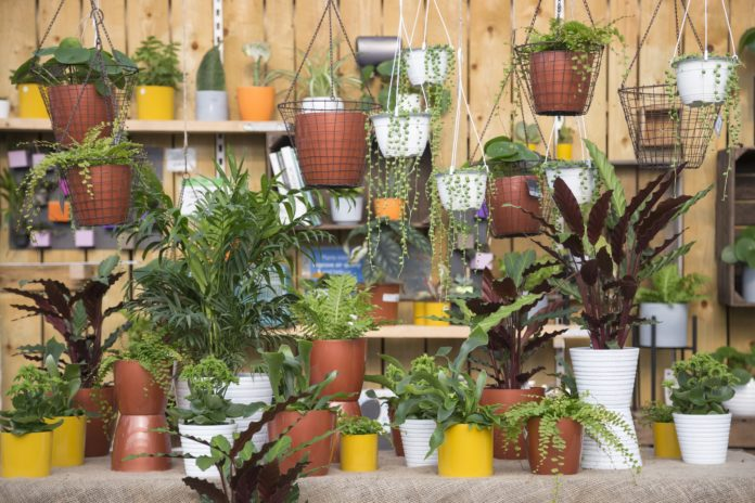 Compared to last year (2017) sales in houseplants were up 16.49% during September.. Copyright GAP Photos Ltd. 2017