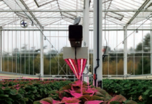 New led lights for strawberry research