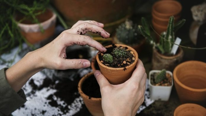 5 Signs You Are Suited to Horticulture