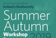 Summer-Autumn-2019-Workshop-Programme