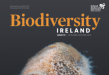 Biodiversity-Ireland-Issue-19-WEB-724x1024