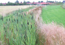 Section through a standard dry swale