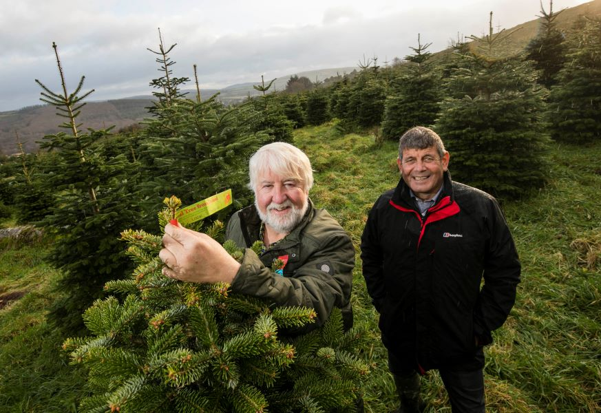 Minister Doyle visited Wicklow Way Christmas Tree Farm run by the Kinlan family.