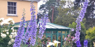Tyrrelstown House image