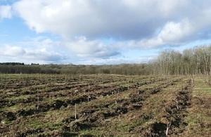 ash dieback field